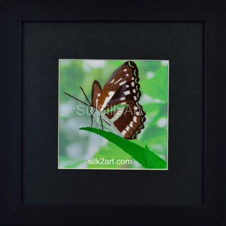 Butterfly on Leaf Tip